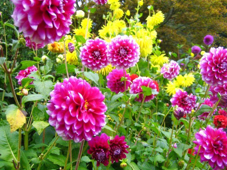 Jak zaplanować mały ogródek warzywny?