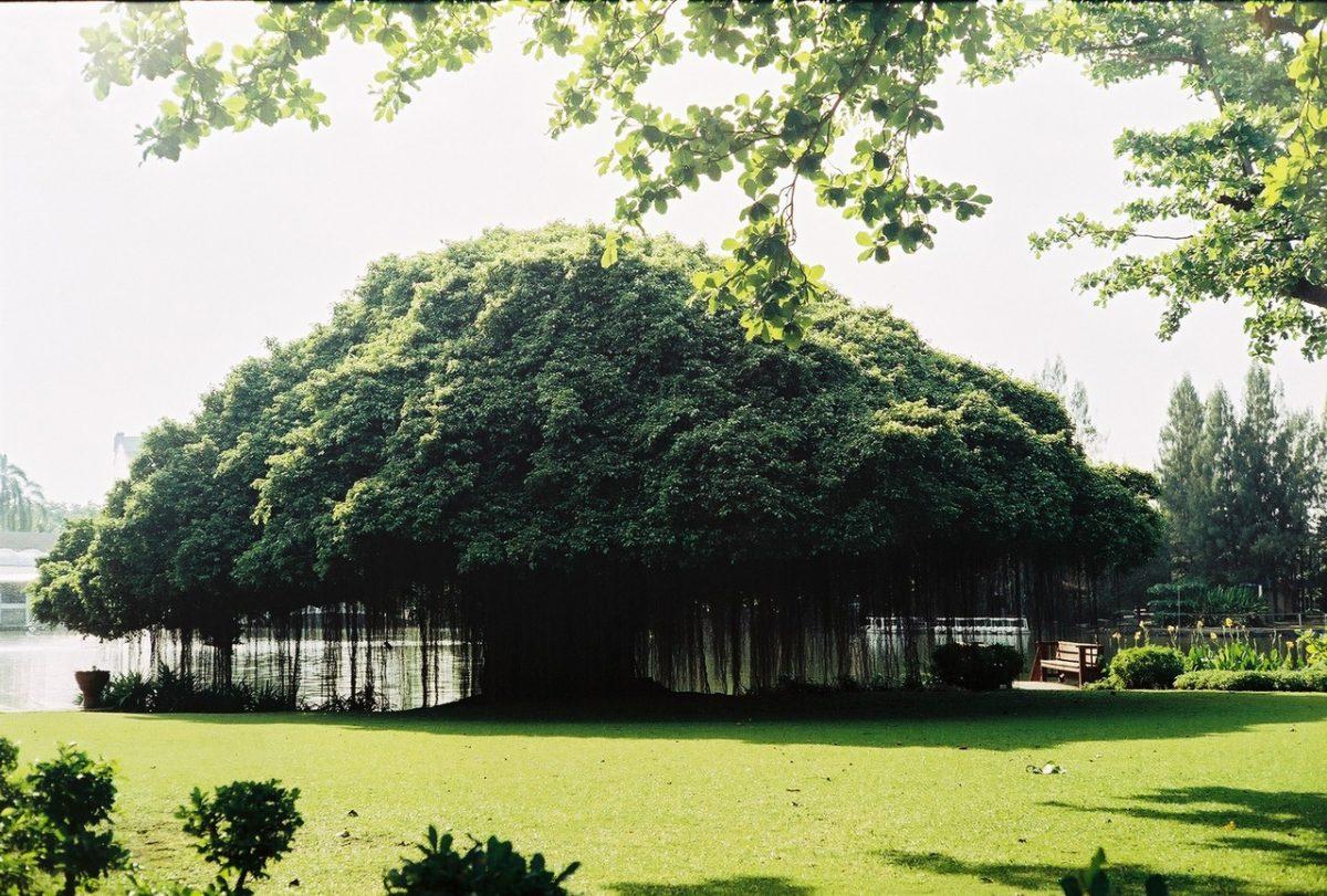 Przycinanie drzew i krzewów owocowych