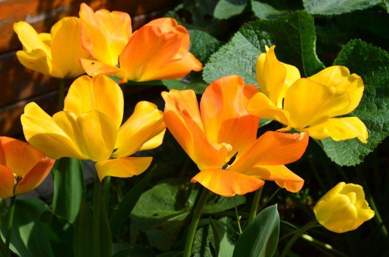 Wysiew roślin jednorocznych