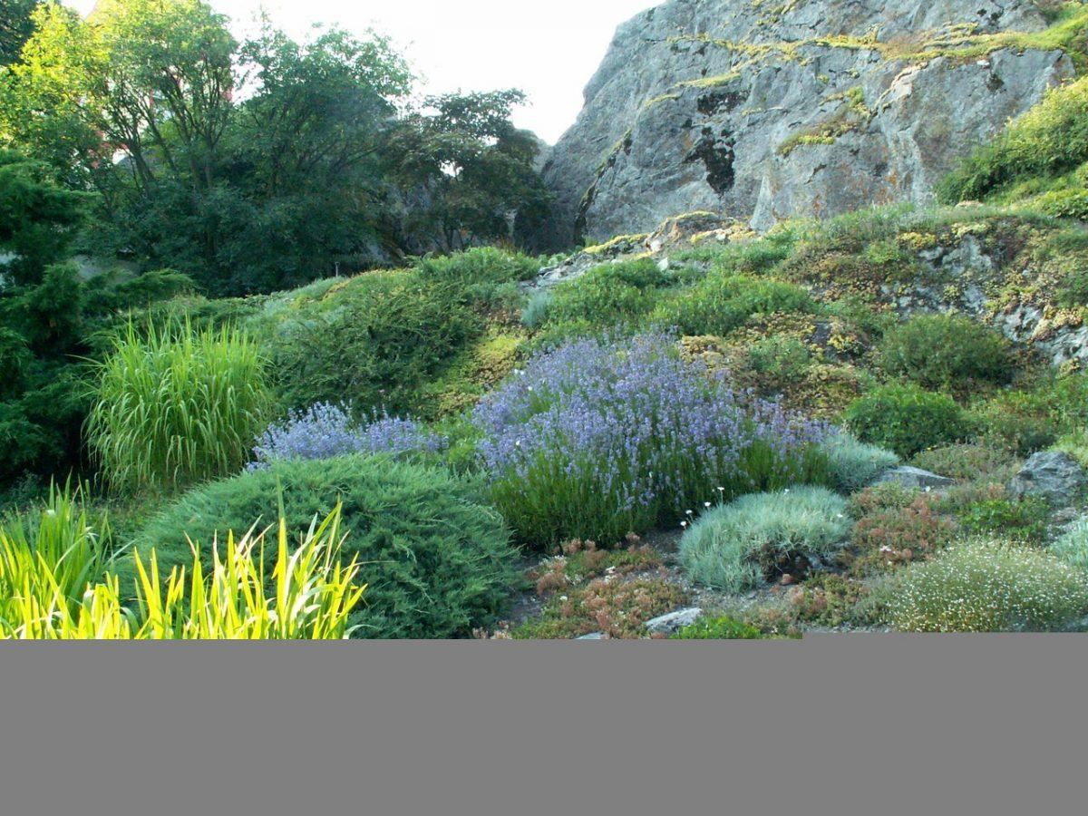 Jak urządzić ogródek skalny?