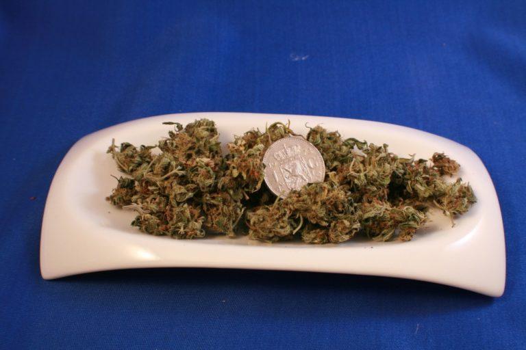 Warto stosować nasiona marihuany indoor