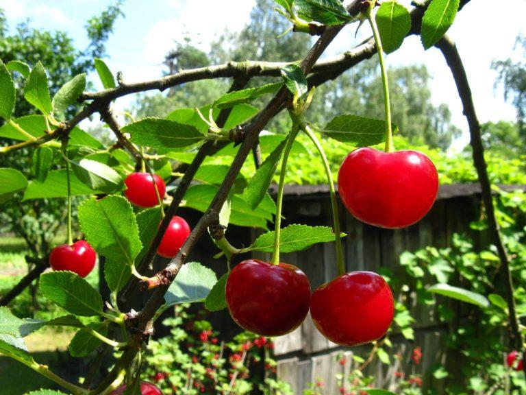 Chwasty i ich negatywny wpływ na rośliny ozdobne